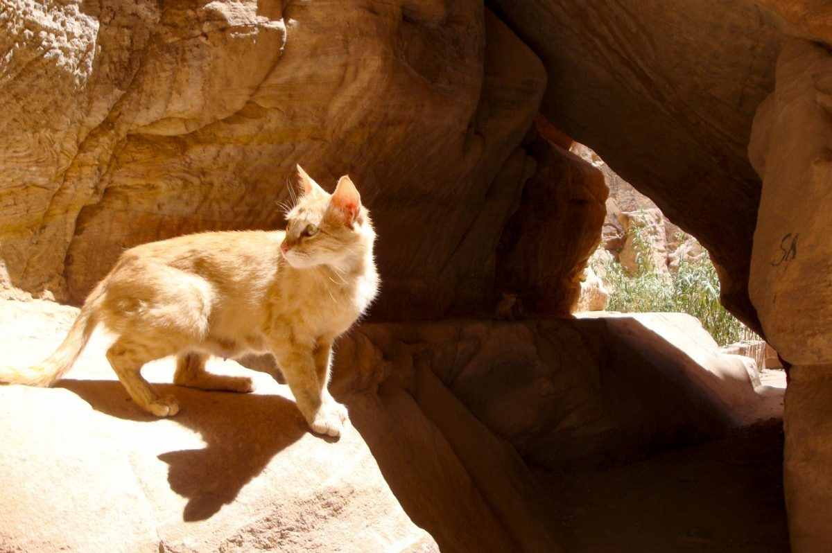 THE CAT OF PETRA